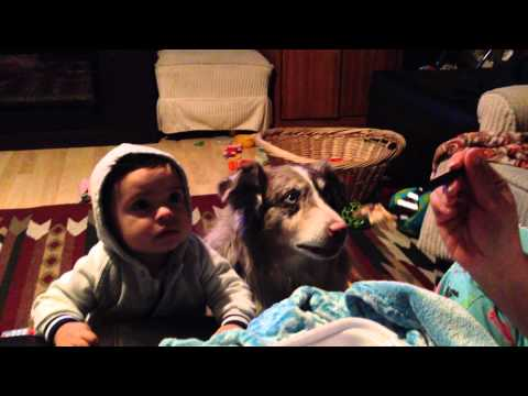 ママってしゃべる犬が一生懸命すぎてほほ笑ましい