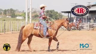 MVO HORSE BUSINESS -  PRUDENTE  PRUDENTE
