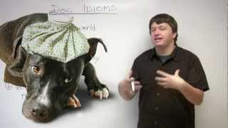 6 Dog Idioms in English