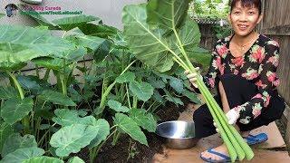 🇨🇦129》 Đi chôm rau quả ở vườn khi chủ nhà đi du lịch xa | Harvesting organic vegetables