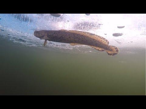 Зимняя подлёдная рыбалка. Открытие сезона 2017-2018 Мурманская область /Winter ice fishing