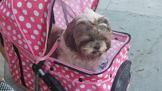 ♥ Cute Dogs - California ♥