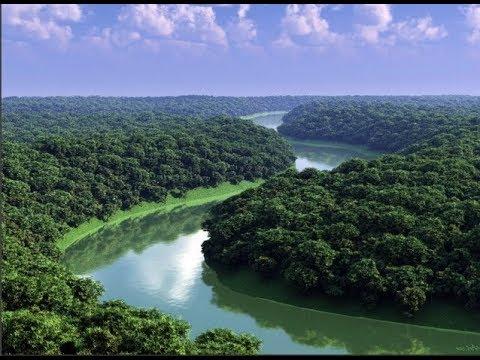 Исчезновение экспедиции в джунглях Амазонки.
