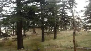Ouadi Qadisha (the Holy Valley) and the Forest of the Cedars of God (Horsh Arz el-Rab)