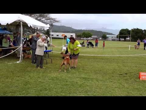 GOMES KENNEL PONO IN GROUP