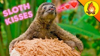 WORLD FAMOUS SLOTH…gives tiny kisses!