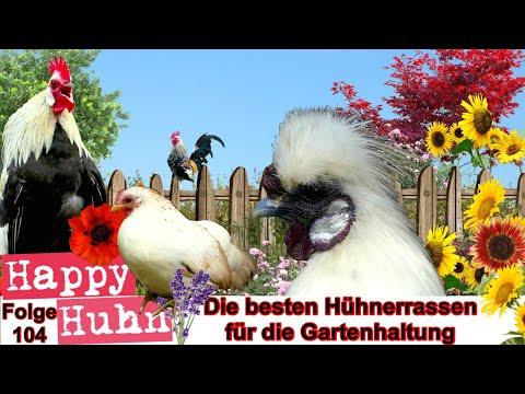 Happy Huhn Folge 104: Die besten Hühnerrassen für Gärten - Gartenhaltung, welche Hühner eignen sich?