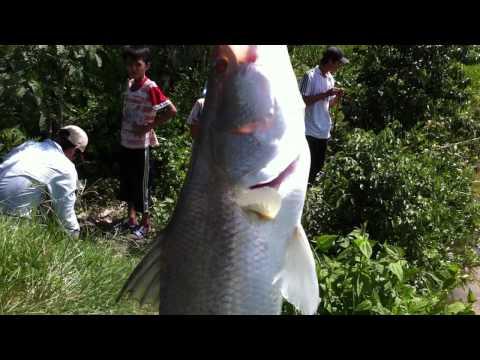 Cau ca Chem CLB_câu cá chẽm_08/2011