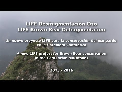 LIFE Desfragmentacion Oso - LIFE Bear Defragmentation - VIDEO 1