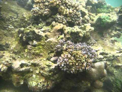 Sri Lanka,ශ්රී ලංකා,Ceylon,Coral Reef (27)