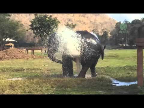 スプリンクラー水浴びをすることが大好きな像