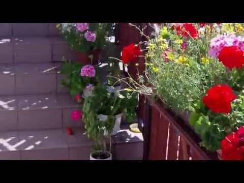 Kwiaty W Moim Ogrodzie I Na Balkonie.Jak Zrobić Ogród,skalniak I Ukwiecic Balkon.