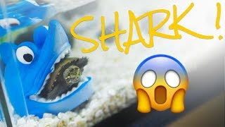 BABY TURTLE EATEN BY A SHARK