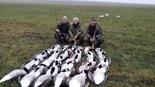 Goose Hunting in Sweden ( Gåsjakt ) ( Kaz avi isvec ) 2013