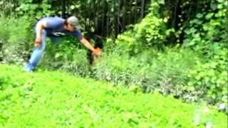 Baby Deer Rescue And Release  - So Touching