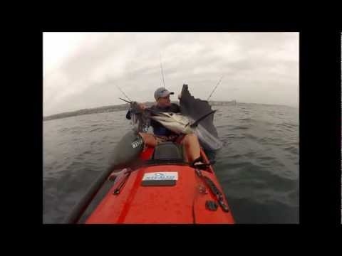 sailfish off Durban