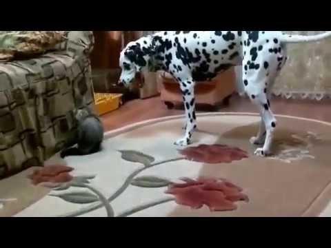 Приколы над животными