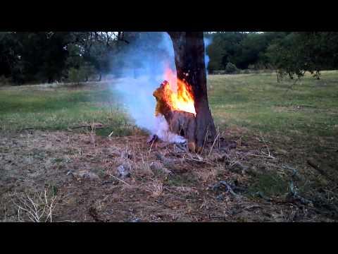 Lightning-Struck Tree Burning from Inside