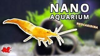 Nano aquarium for Neocaridina shrimps