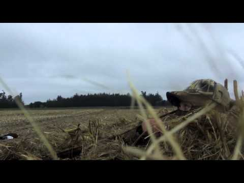 New Zealand Duck Shooting Opening Weekend 2013