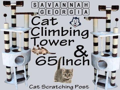 Savannah Georgia cat climbing tower and 65 inch cat scratching post