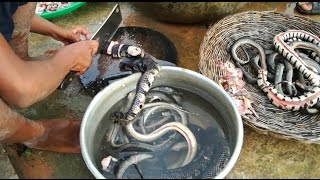 Amazing 2 Children Cook Snake For Dinner - How to Cook Snake in Cambodia