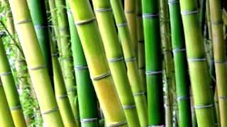 Japanese Timber Bamboo