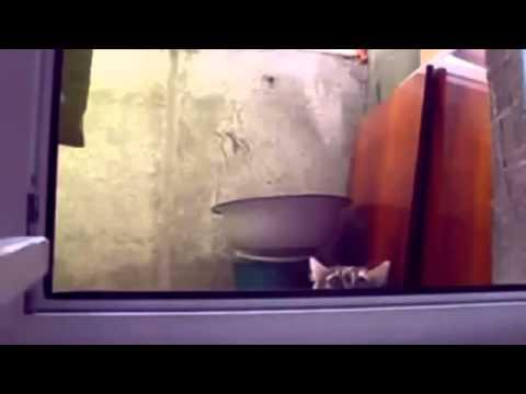 Улетное видео про кошек