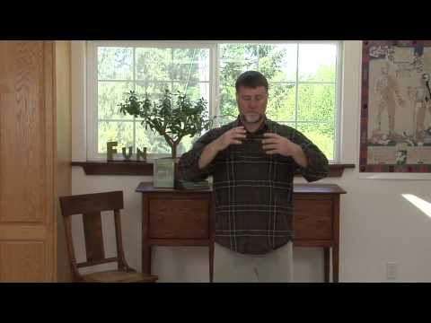 Reduce Blood Pressure with Qigong 2