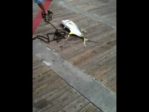 Guy catching a big fish off the pier at Gulf Shores Alabama
