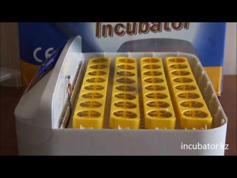 Инкубатор на 32 яиц
