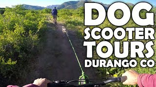 Dog Scooter Tours | Durango, Colorado USA