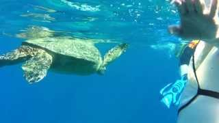 Sea Turtle in Hawaii by Lifeproof Case+iPhone