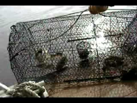 Catching catfish in my homemade catfish trap how to save for Homemade fish traps