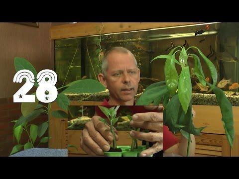 Die Sämlinge Und Wie Geht Es Weiter Mit Den Exoten Und Anderen Pflanzen Teil 28