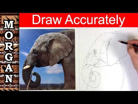 How to draw accurately - Jason Morgan wildlife art