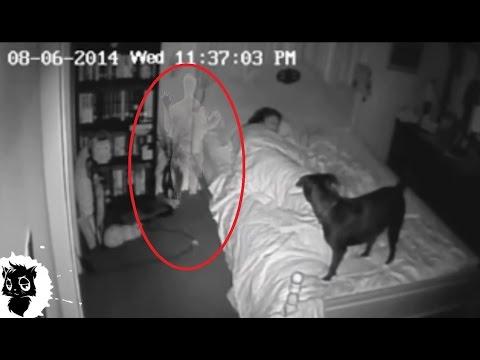 5 РЕАЛЬНЫХ СЛУЧАЕВ КОГДА ДОМОВОГО СНЯЛИ НА КАМЕРУ [Черный кот]