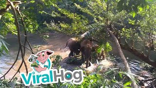 Baby Elephant Rescued from Mud Hole || ViralHog