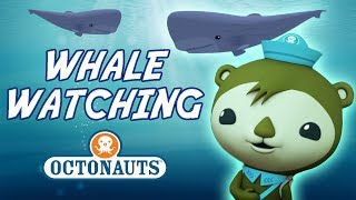 Octonauts - Whale Watching | Cartoons for Kids | Underwater Sea Education