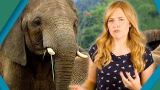 Which Animal has the Biggest Penis? | Earth Unplugged