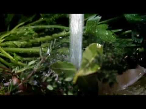 gordon ramsay  How to make fresh chicken stock