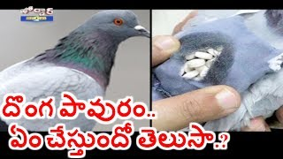 Pigeon Caught with Backpack of Drugs | Jordar News