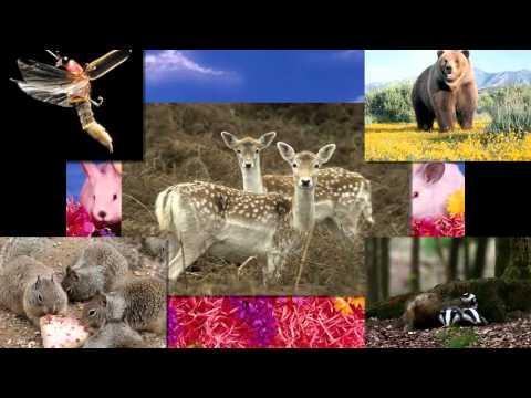 Cantecele - Cantecul animalelor