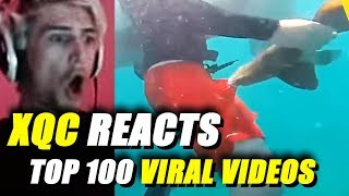 xQc Reacts to Top 100 Most Viral Videos | With Chat