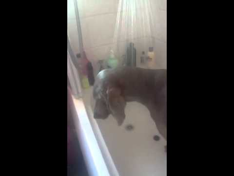Levi Getting A Bath Xxx video