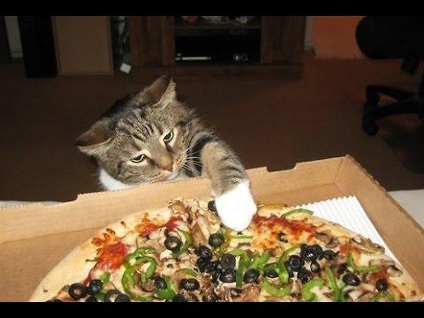 """מסתבר שגם חתולים מאוד אוהבים פיצה והם גם יודעים """"לגנוב"""" אותה בלי בעיה"""