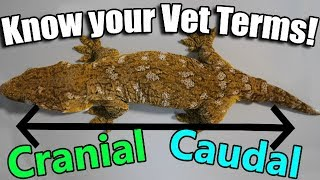 An Intro to Vet Terminology