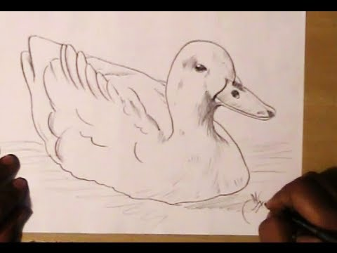 How to draw a realistic duck