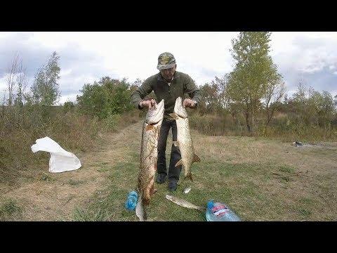 ловля щуки на самаре видео