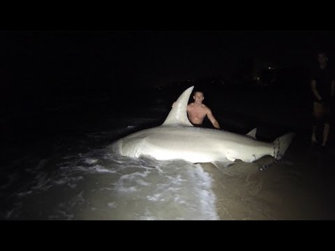 Giant 14ft Hammerhead Caught off the Beach!